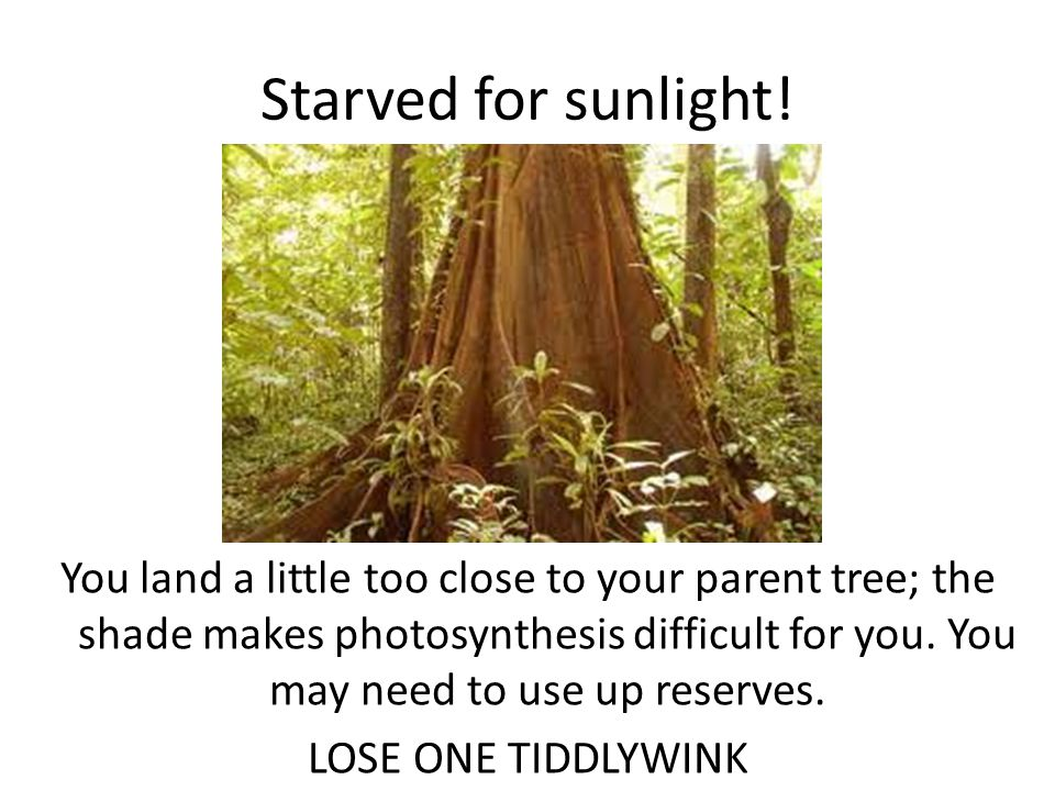 Starved for sunlight.