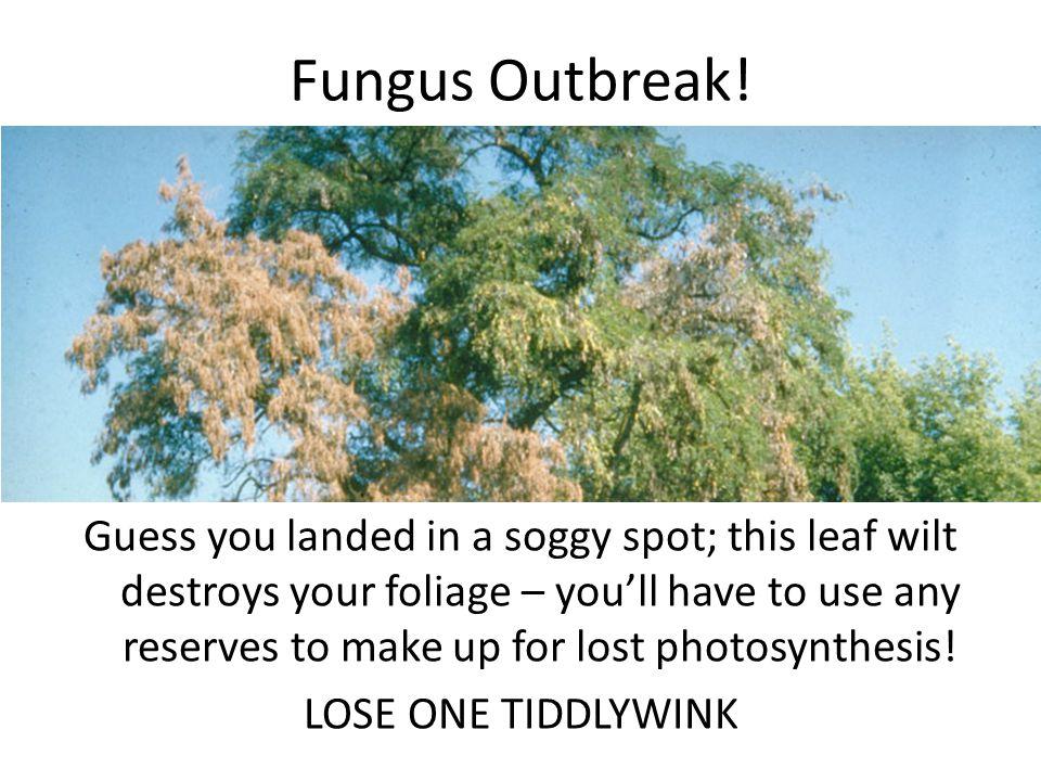 Fungus Outbreak.