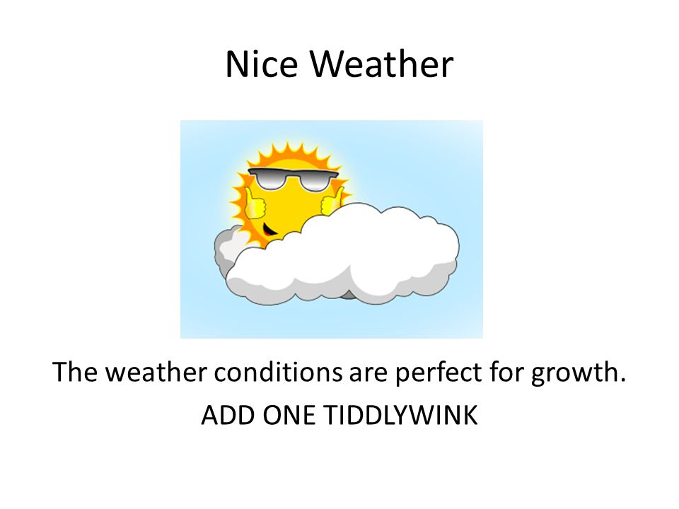 Nice Weather The weather conditions are perfect for growth. ADD ONE TIDDLYWINK