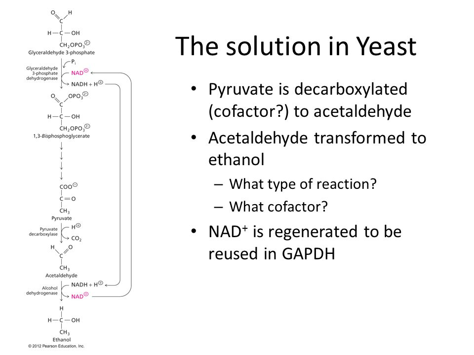 The solution in Yeast Pyruvate is decarboxylated (cofactor ) to acetaldehyde Acetaldehyde transformed to ethanol – What type of reaction.