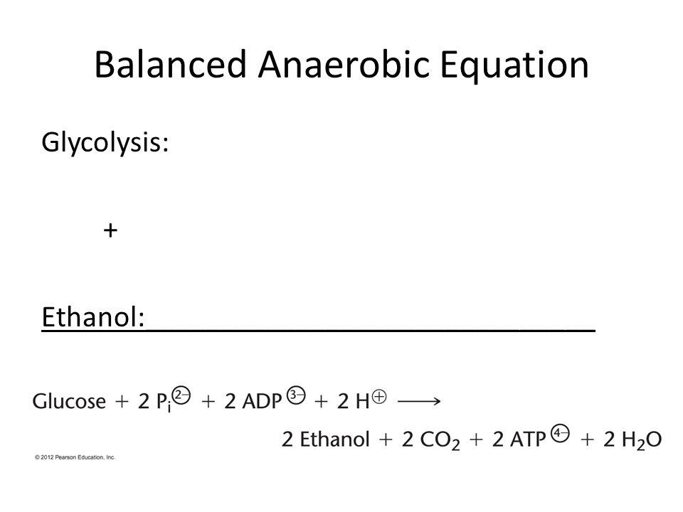 Balanced Anaerobic Equation Glycolysis: + Ethanol:______________________________