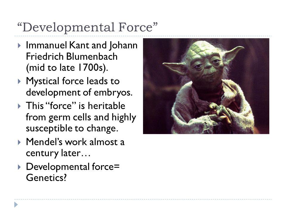 """""""Developmental Force""""  Immanuel Kant and Johann Friedrich Blumenbach (mid to late 1700s).  Mystical force leads to development of embryos.  This """"f"""