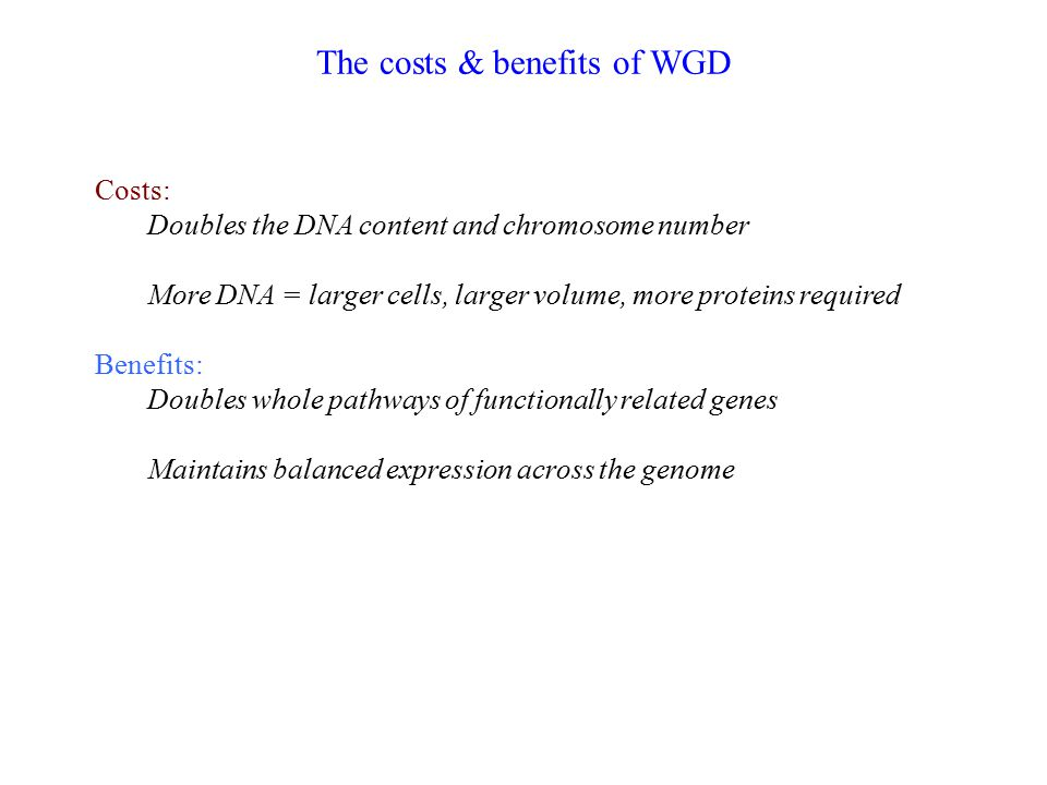 The costs & benefits of WGD Costs: Doubles the DNA content and chromosome number More DNA = larger cells, larger volume, more proteins required Benefi