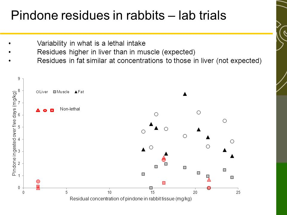 Pindone residues in rabbits – lab trials Variability in what is a lethal intake Residues higher in liver than in muscle (expected) Residues in fat sim