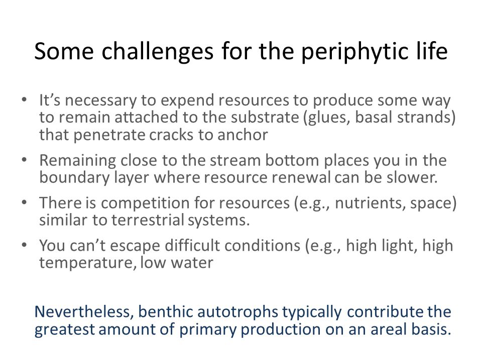 Some challenges for the periphytic life It's necessary to expend resources to produce some way to remain attached to the substrate (glues, basal strands) that penetrate cracks to anchor Remaining close to the stream bottom places you in the boundary layer where resource renewal can be slower.