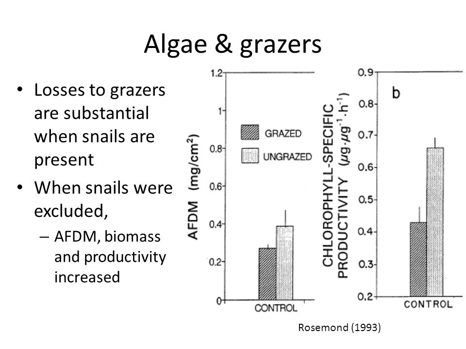 Algae & grazers Losses to grazers are substantial when snails are present When snails were excluded, – AFDM, biomass and productivity increased Rosemond (1993)