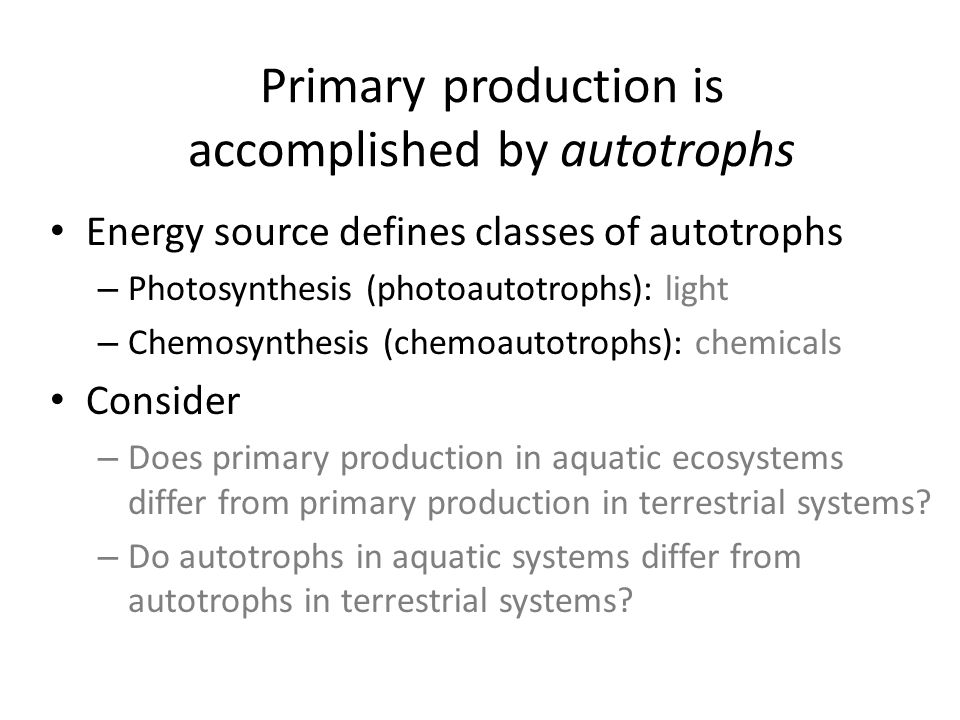 Types of autotrophs in streams Phytoplankton (aka Potamoplankton) – Mostly microscopic algae growing suspended in streams Periphyton (benthic algae) – Microscope to macroscopic algae growing on the stream bottom, attached to various substrate – Most abundant and diverse autotrophic group in streams Macrophytes – Macroscopic, mostly vascular plants in flowing waters – Includes mosses and liverworts (called bryophytes)