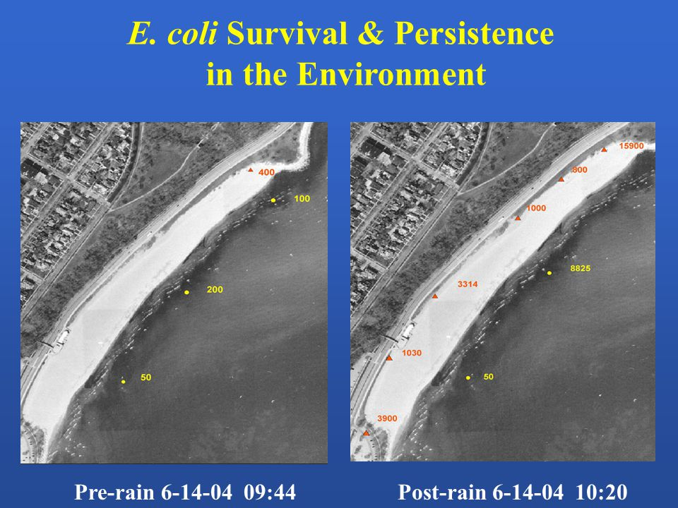 Pre-rain 6-14-04 09:44Post-rain 6-14-04 10:20 E. coli Survival & Persistence in the Environment