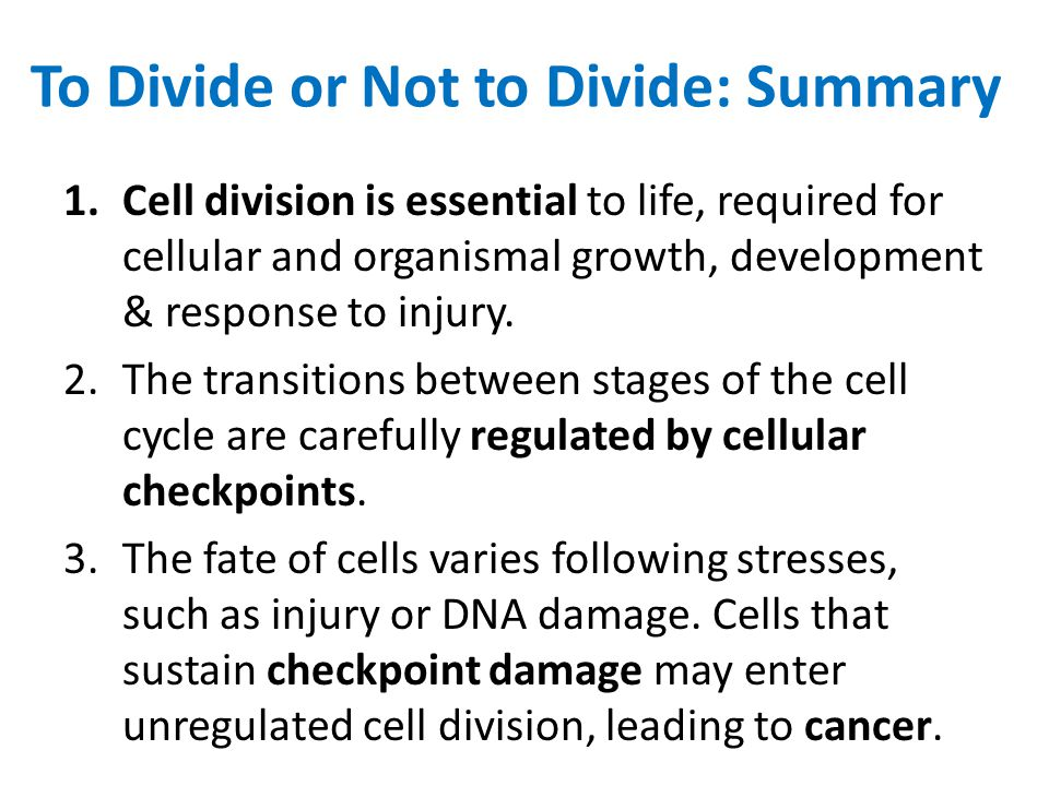 To Divide or Not to Divide: Summary 1.Cell division is essential to life, required for cellular and organismal growth, development & response to injury.