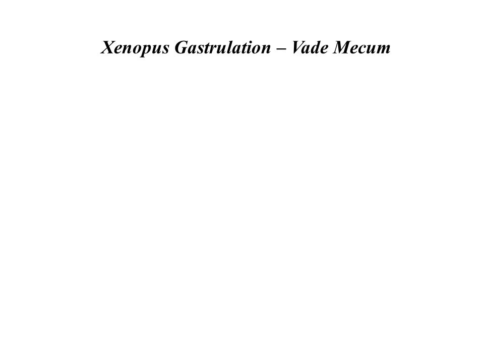 Xenopus Gastrulation – Vade Mecum