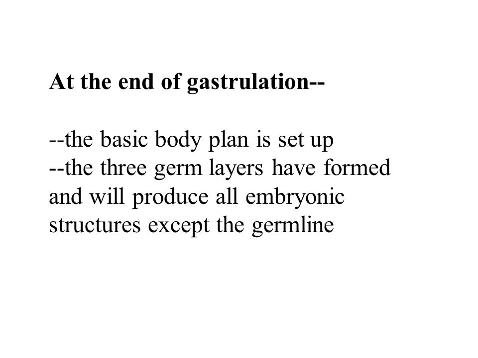 At the end of gastrulation-- --the basic body plan is set up --the three germ layers have formed and will produce all embryonic structures except the germline