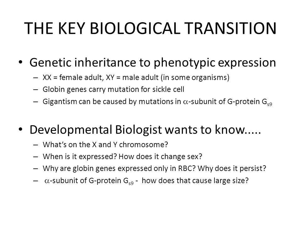 THE KEY BIOLOGICAL TRANSITION Genetic inheritance to phenotypic expression – XX = female adult, XY = male adult (in some organisms) – Globin genes carry mutation for sickle cell – Gigantism can be caused by mutations in  -subunit of G-protein G s9 Developmental Biologist wants to know.....