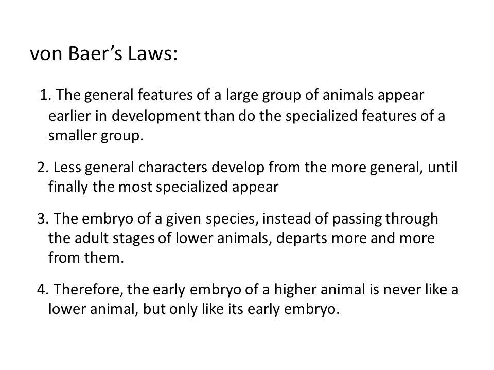 von Baer's Laws: 1.
