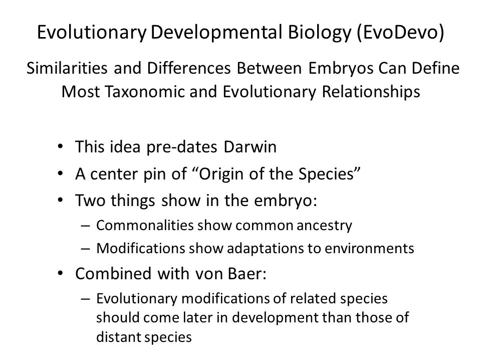 Evolutionary Developmental Biology (EvoDevo) Similarities and Differences Between Embryos Can Define Most Taxonomic and Evolutionary Relationships This idea pre-dates Darwin A center pin of Origin of the Species Two things show in the embryo: – Commonalities show common ancestry – Modifications show adaptations to environments Combined with von Baer: – Evolutionary modifications of related species should come later in development than those of distant species