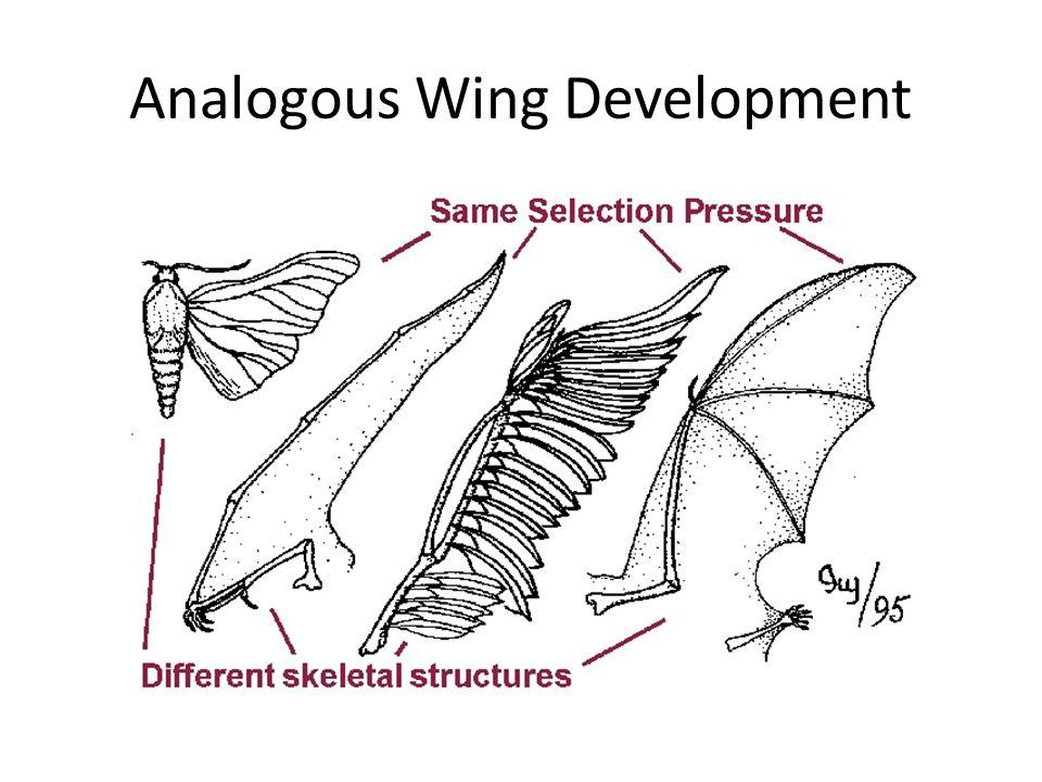 Analogous Wing Development