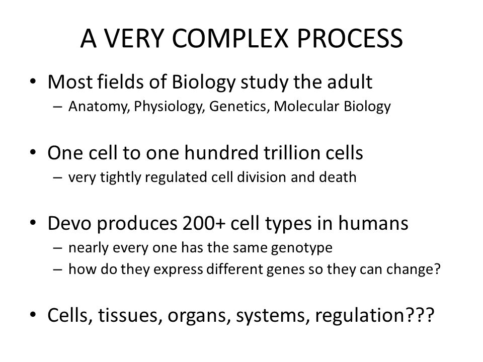 How does developmental biology contribute to this evolution.