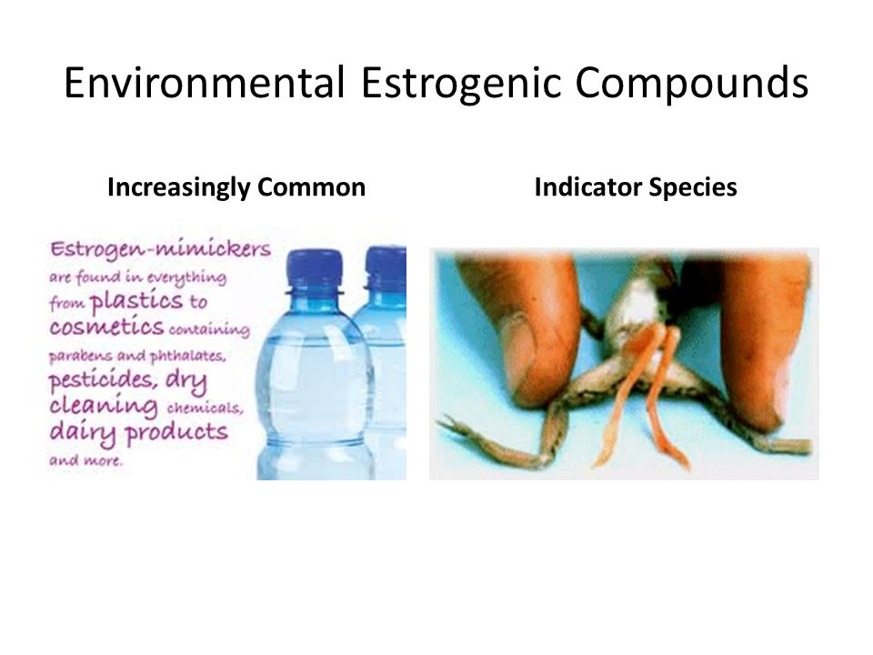 Environmental Estrogenic Compounds Increasingly CommonIndicator Species