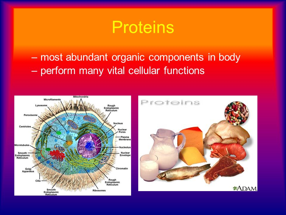 Proteins –most abundant organic components in body –perform many vital cellular functions