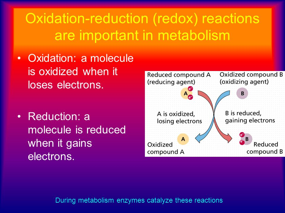Oxidation-reduction (redox) reactions are important in metabolism Oxidation: a molecule is oxidized when it loses electrons. Reduction: a molecule is