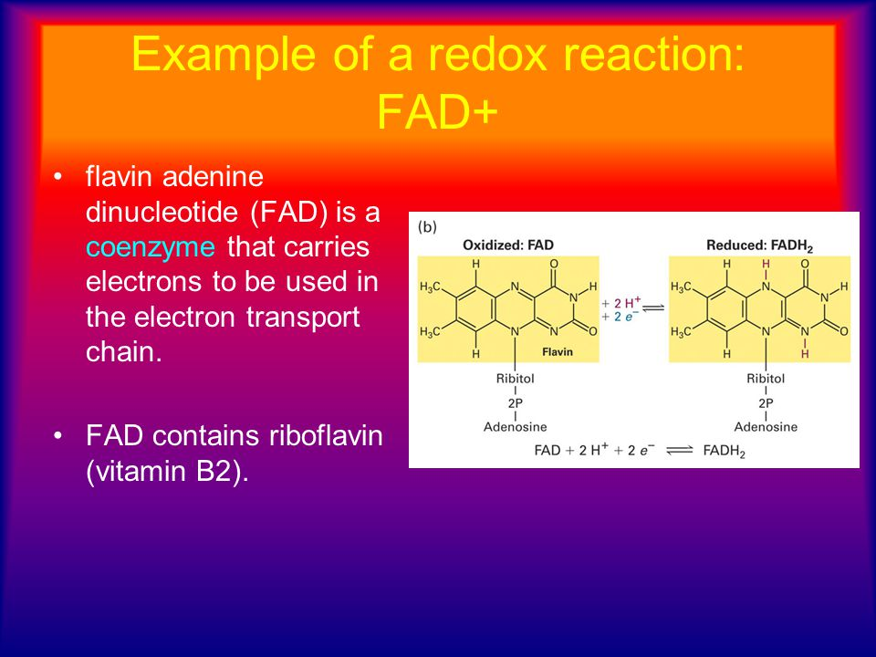 Example of a redox reaction: FAD+ flavin adenine dinucleotide (FAD) is a coenzyme that carries electrons to be used in the electron transport chain. F