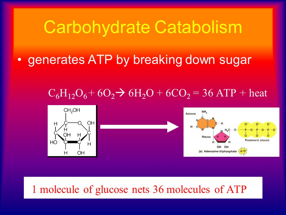 generates ATP by breaking down sugar C 6 H 12 O 6 + 6O 2  6H 2 O + 6CO 2 = 36 ATP + heat 1 molecule of glucose nets 36 molecules of ATP Carbohydrate