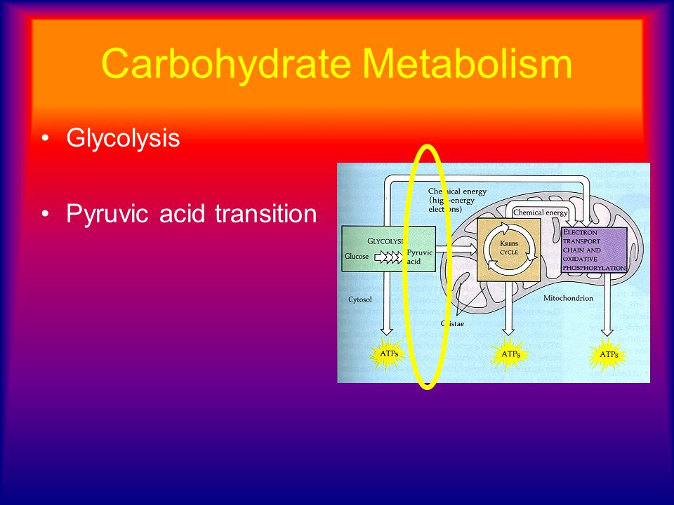 Carbohydrate Metabolism Glycolysis Pyruvic acid transition