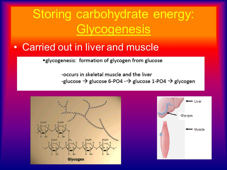 Storing carbohydrate energy: Glycogenesis Carried out in liver and muscle