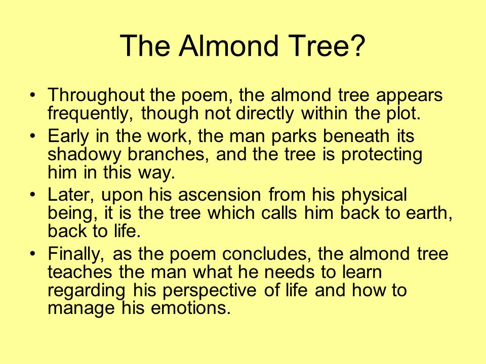 The Almond Tree? Throughout the poem, the almond tree appears frequently, though not directly within the plot. Early in the work, the man parks beneat