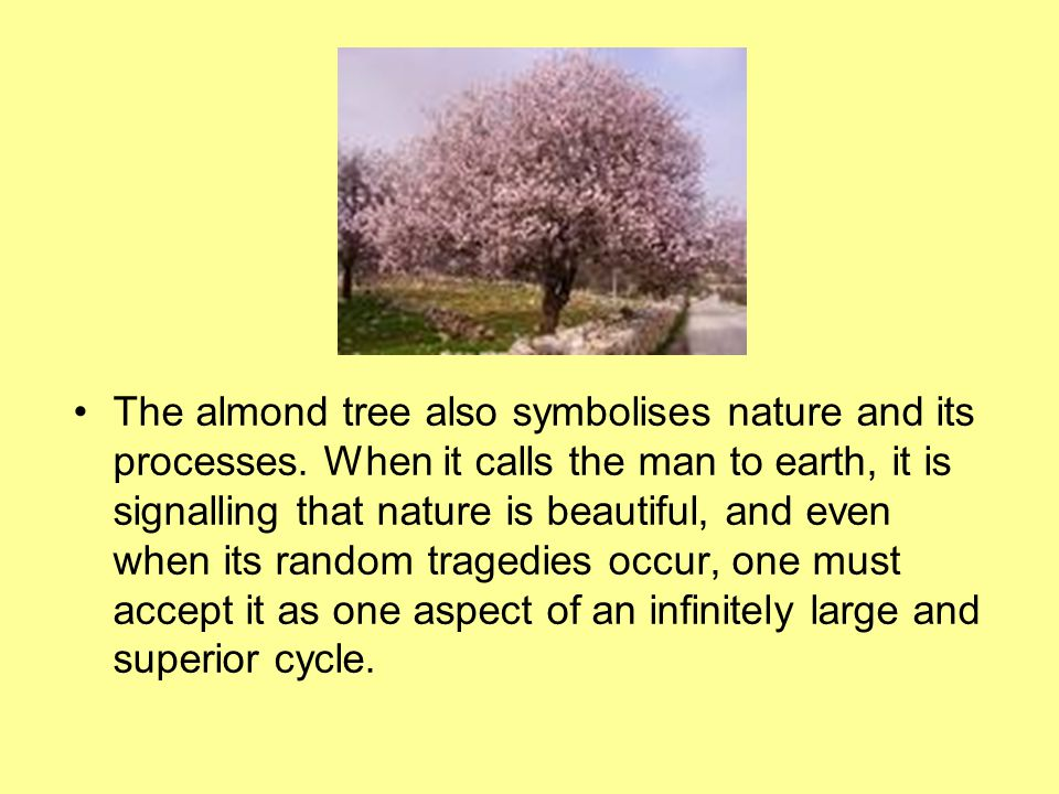 The almond tree also symbolises nature and its processes. When it calls the man to earth, it is signalling that nature is beautiful, and even when its