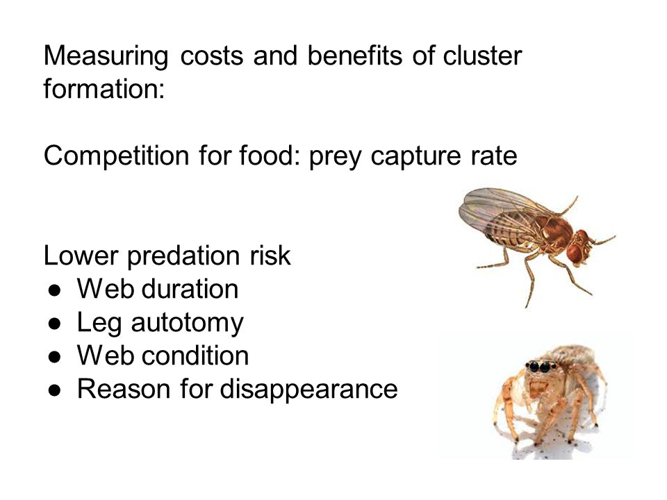 Measuring costs and benefits of cluster formation: Competition for food: prey capture rate Lower predation risk ●Web duration ●Leg autotomy ●Web condi