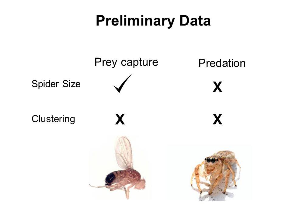 Prey capture Preliminary Data Predation Spider Size Clustering X X X