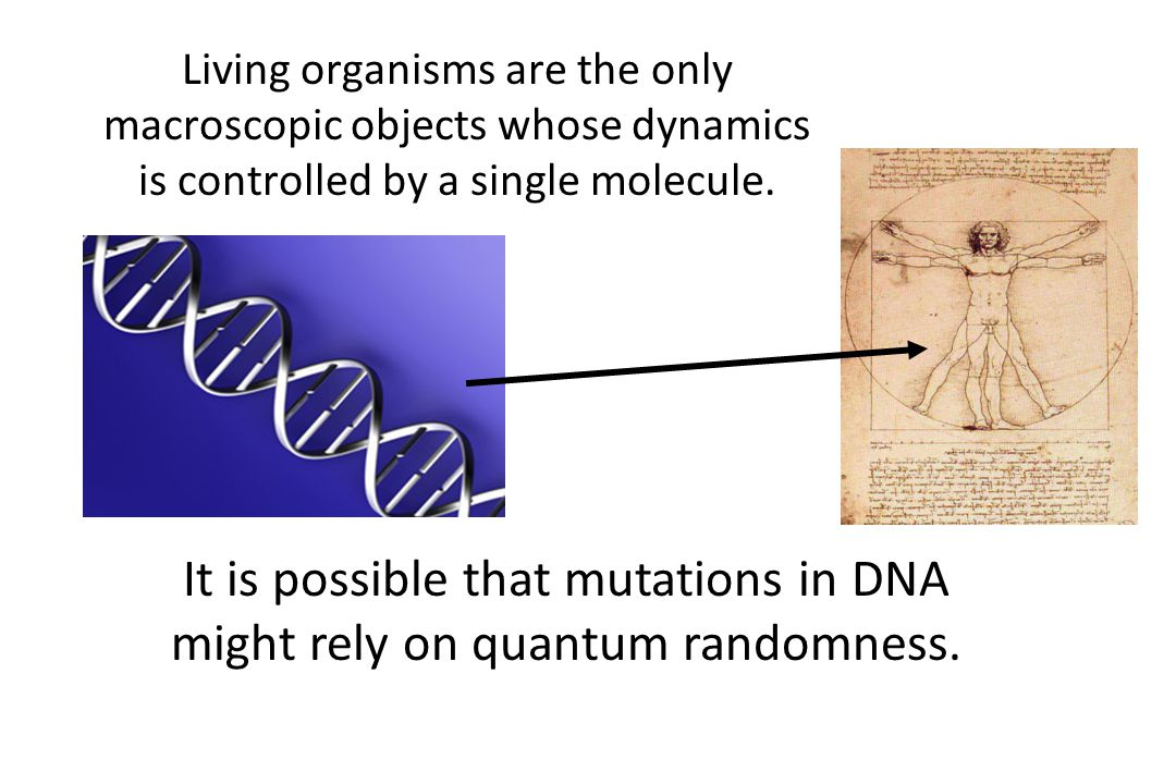It is possible that mutations in DNA might rely on quantum randomness.