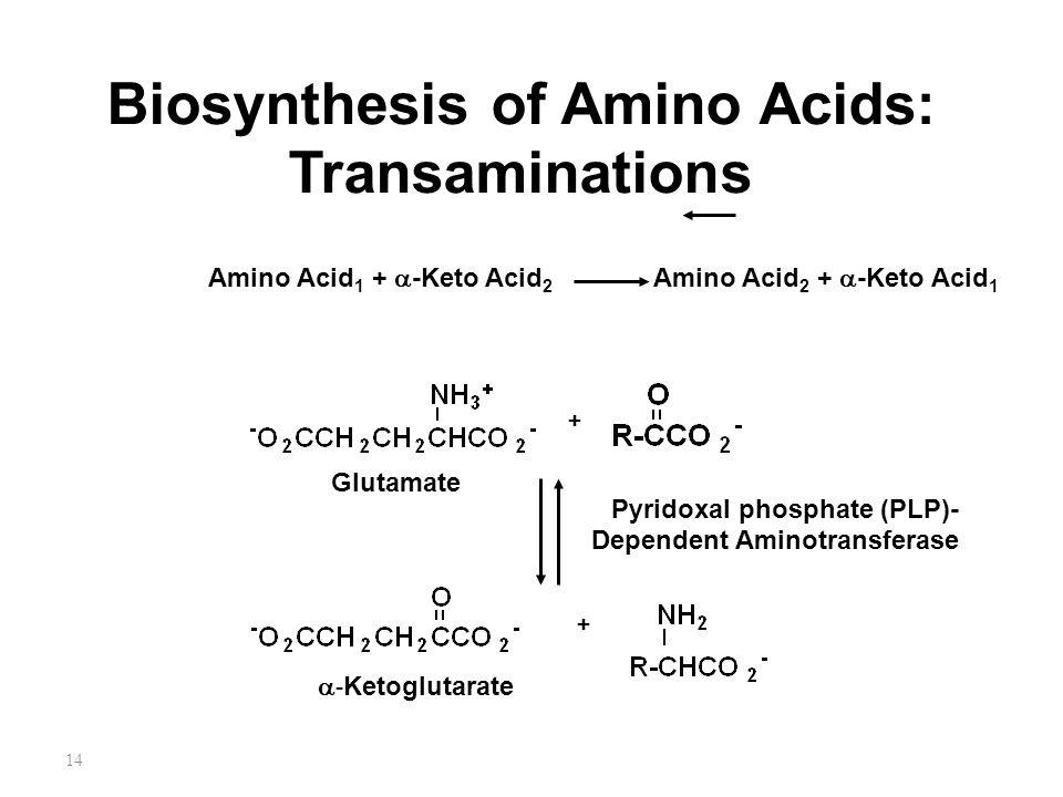14 Biosynthesis of Amino Acids: Transaminations Amino Acid 1 +  -Keto Acid 2 Amino Acid 2 +  -Keto Acid 1 Glutamate +  - Ketoglutarate + Pyridoxal phosphate (PLP)- Dependent Aminotransferase
