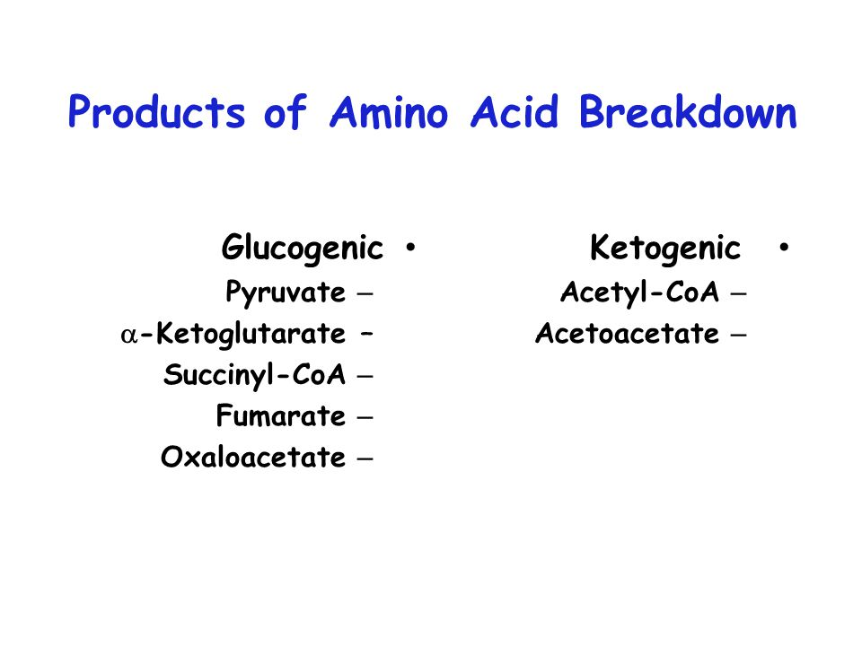 Products of Amino Acid Breakdown Glucogenic – Pyruvate –  -Ketoglutarate – Succinyl-CoA – Fumarate – Oxaloacetate Ketogenic – Acetyl-CoA – Acetoacetate