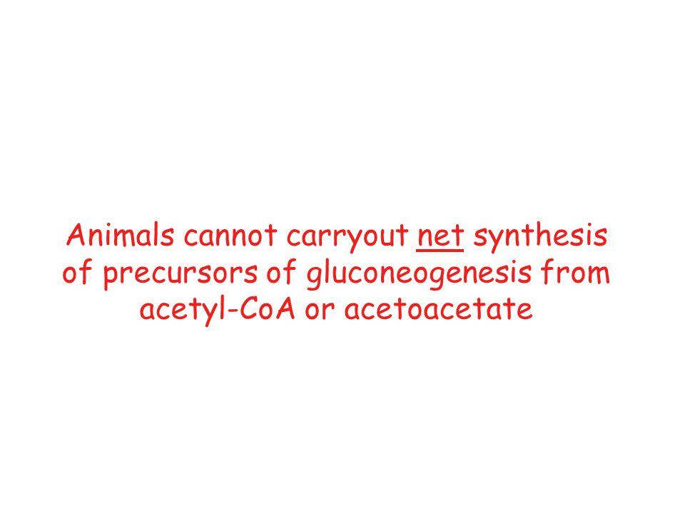 Animals cannot carryout net synthesis of precursors of gluconeogenesis from acetyl-CoA or acetoacetate