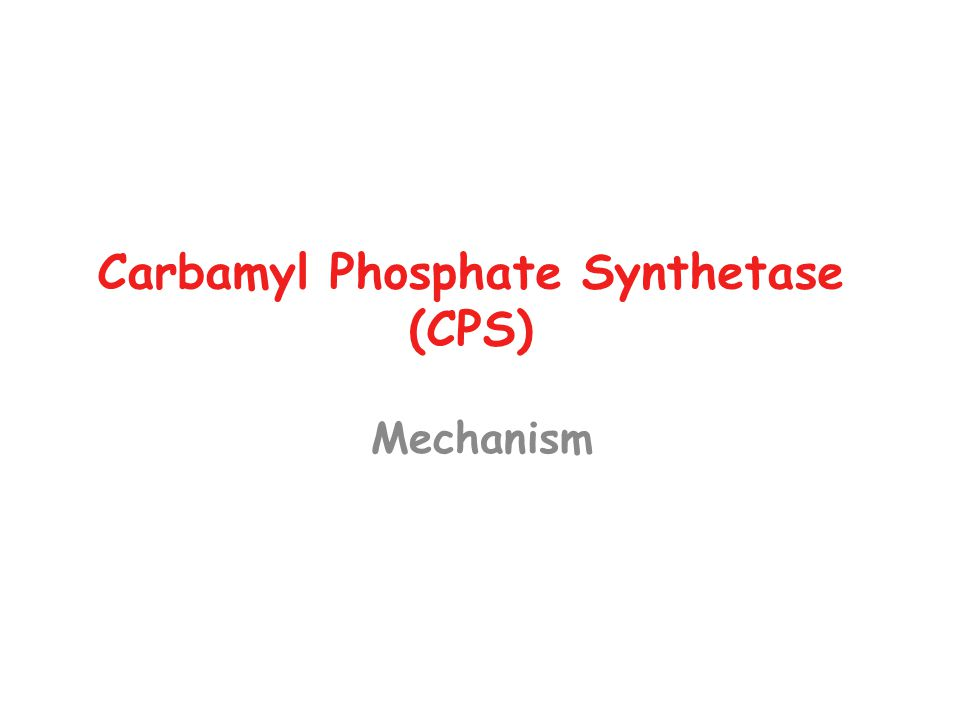 Carbamyl Phosphate Synthetase (CPS) Mechanism