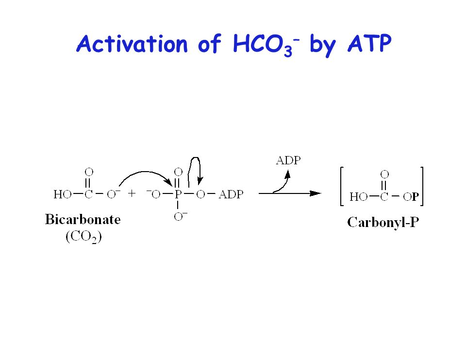 Activation of HCO 3 – by ATP