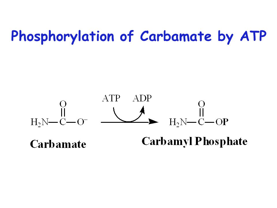 Phosphorylation of Carbamate by ATP