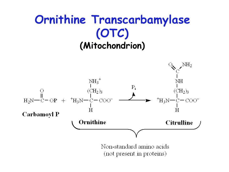 Ornithine Transcarbamylase (OTC) (Mitochondrion)