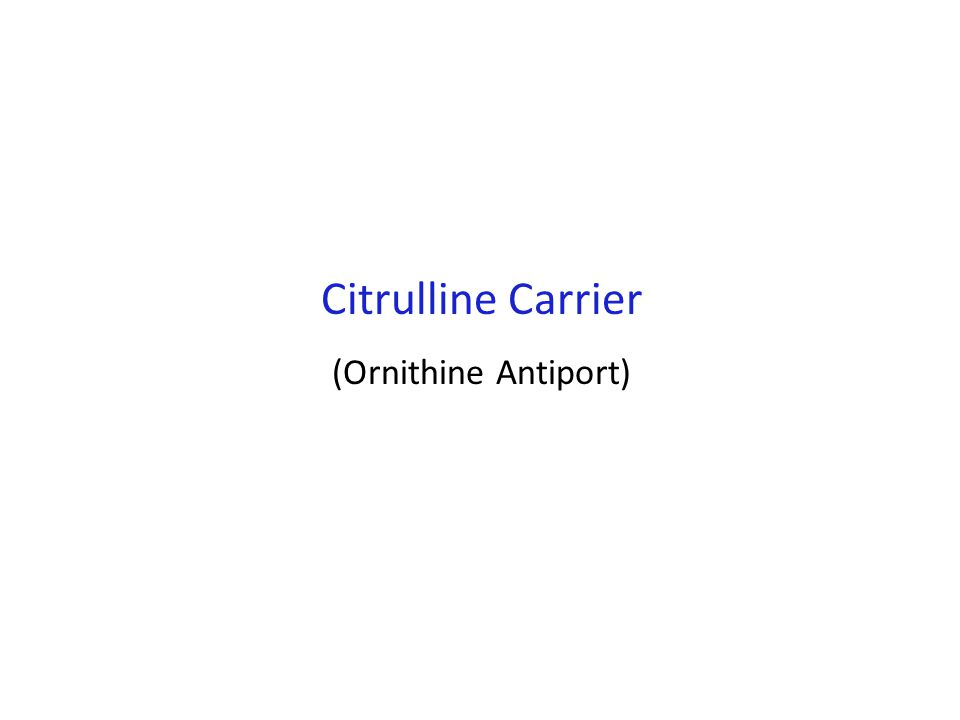 Citrulline Carrier (Ornithine Antiport)
