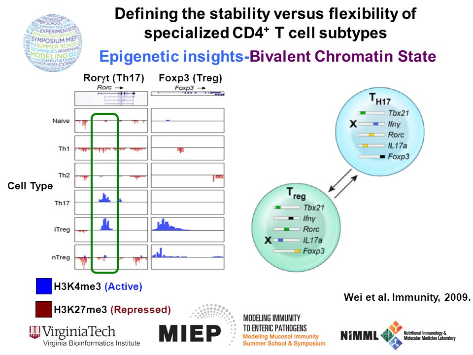 Wei et al. Immunity, 2009. Ror  t (Th17) Foxp3 (Treg) Defining the stability versus flexibility of specialized CD4 + T cell subtypes Epigenetic insig