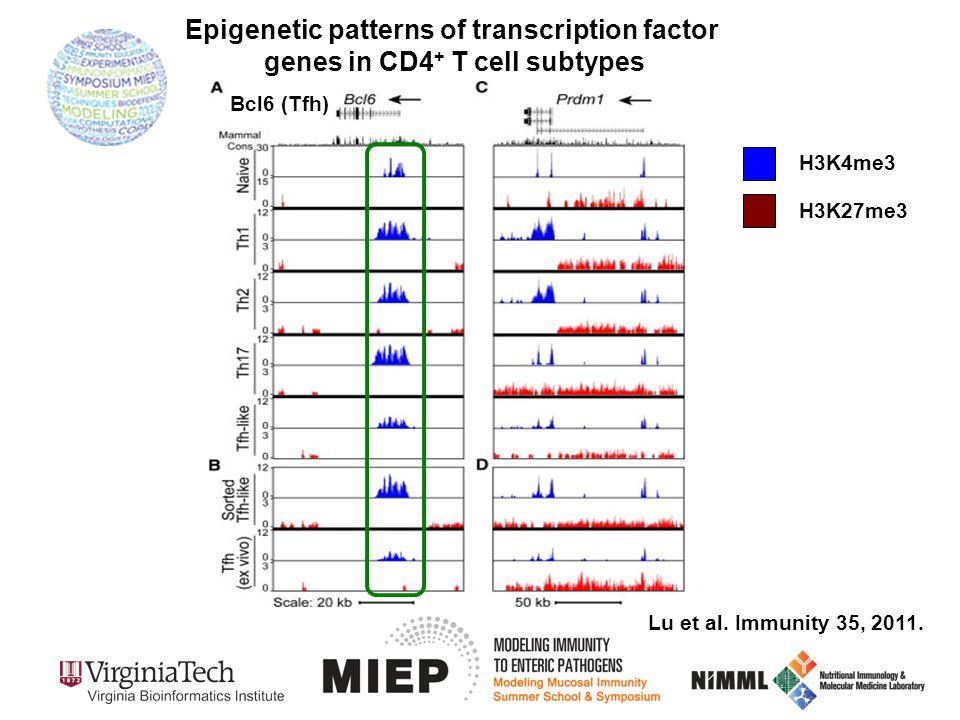H3K4me3 H3K27me3 Lu et al. Immunity 35, 2011. Epigenetic patterns of transcription factor genes in CD4 + T cell subtypes Bcl6 (Tfh)