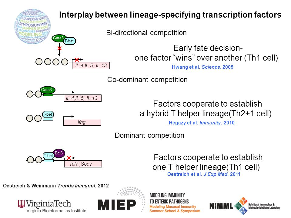 Bi-directional competition Interplay between lineage-specifying transcription factors Gata3 T-bet IL-4,IL-5, IL-13 Early fate decision- one factor wins over another (Th1 cell) Bcl6 T-bet Tcf7,Socs Dominant competition Factors cooperate to establish one T helper lineage(Th1 cell) Bcl6 Co-dominant competition Factors cooperate to establish a hybrid T helper lineage(Th2+1 cell) Bcl6 T-bet Ifng IL-4,IL-5, IL-13 Gata3 Oestreich & Weinmann Trends Immunol.