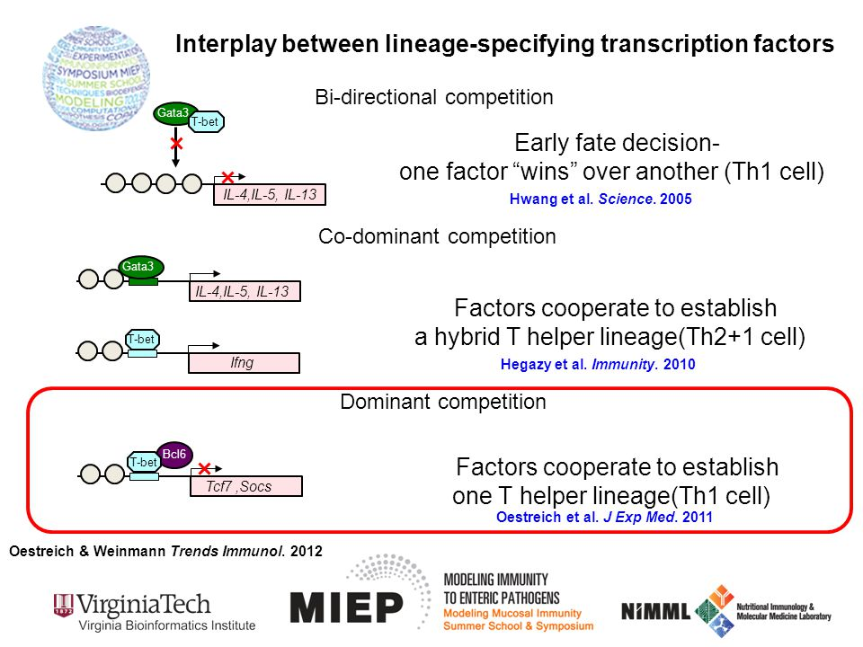 """Bi-directional competition Interplay between lineage-specifying transcription factors Gata3 T-bet IL-4,IL-5, IL-13 Early fate decision- one factor """"wi"""