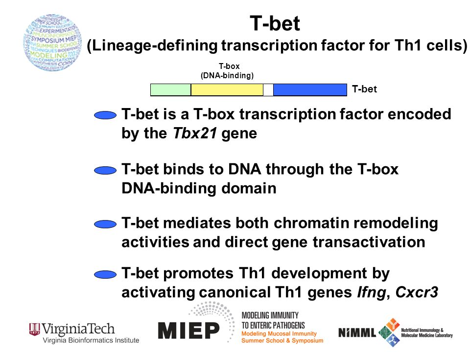 T-bet (Lineage-defining transcription factor for Th1 cells) T-bet T-box (DNA-binding) T-bet binds to DNA through the T-box DNA-binding domain T-bet is a T-box transcription factor encoded by the Tbx21 gene T-bet mediates both chromatin remodeling activities and direct gene transactivation T-bet promotes Th1 development by activating canonical Th1 genes Ifng, Cxcr3