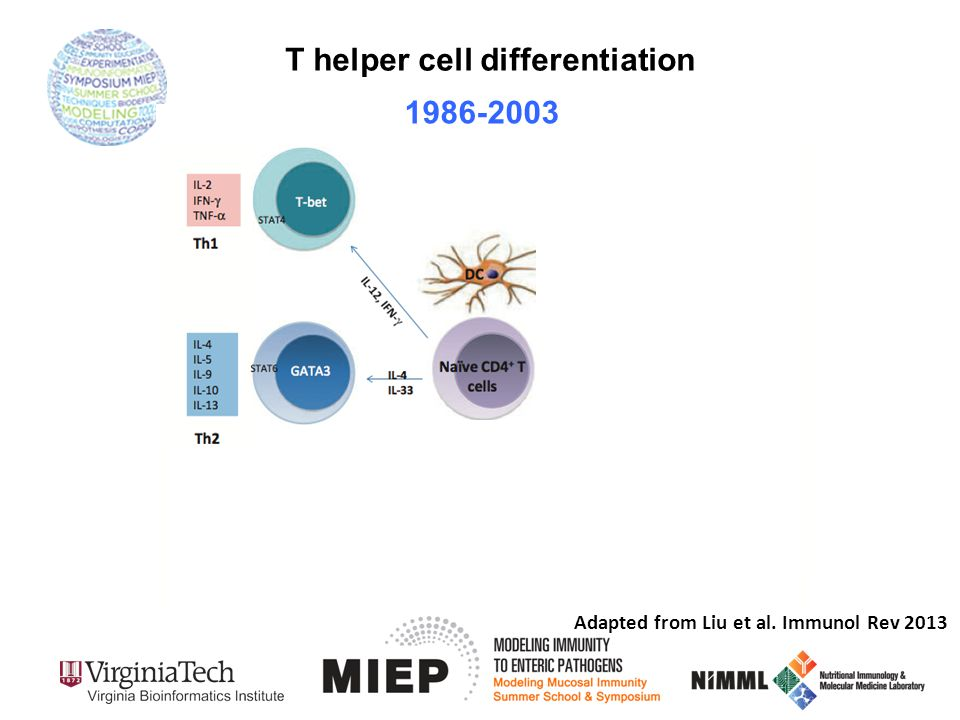 T helper cell differentiation Adapted from Liu et al. Immunol Rev 2013 1986-2003