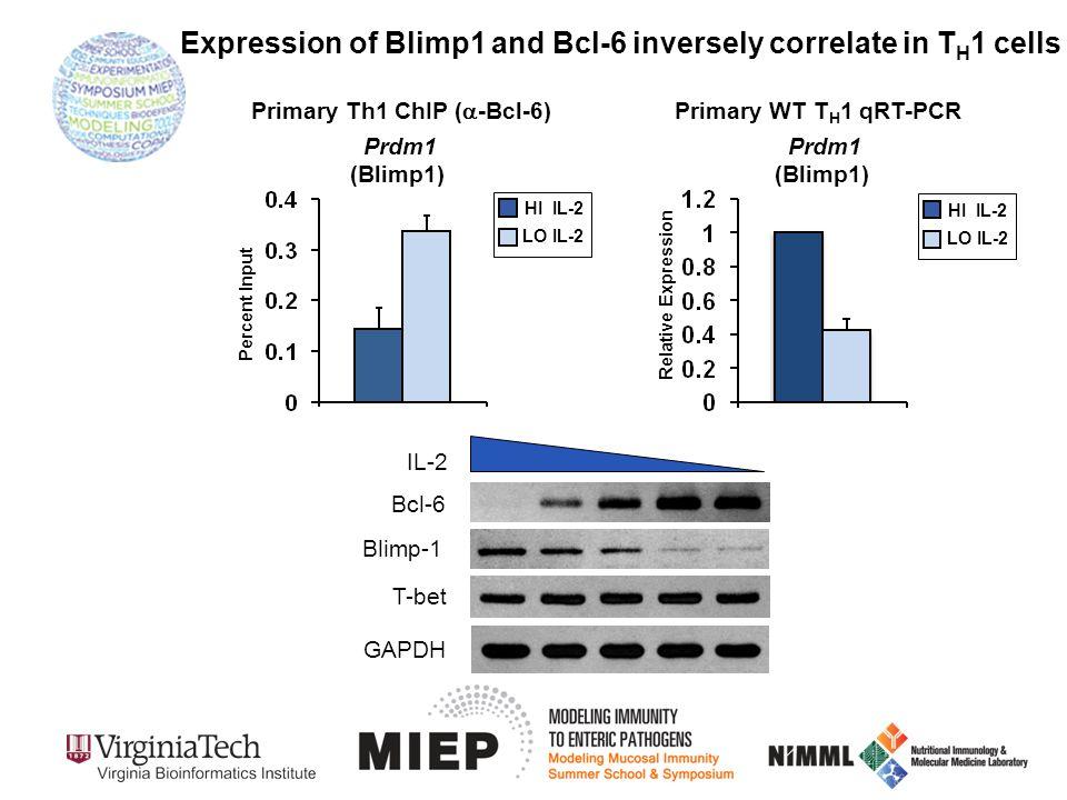 GAPDH Bcl-6 IL-2 T-bet Blimp-1 Primary WT T H 1 qRT-PCR Prdm1 (Blimp1) HI IL-2 LO IL-2 Relative Expression HI IL-2 LO IL-2 Percent Input Primary Th1 C
