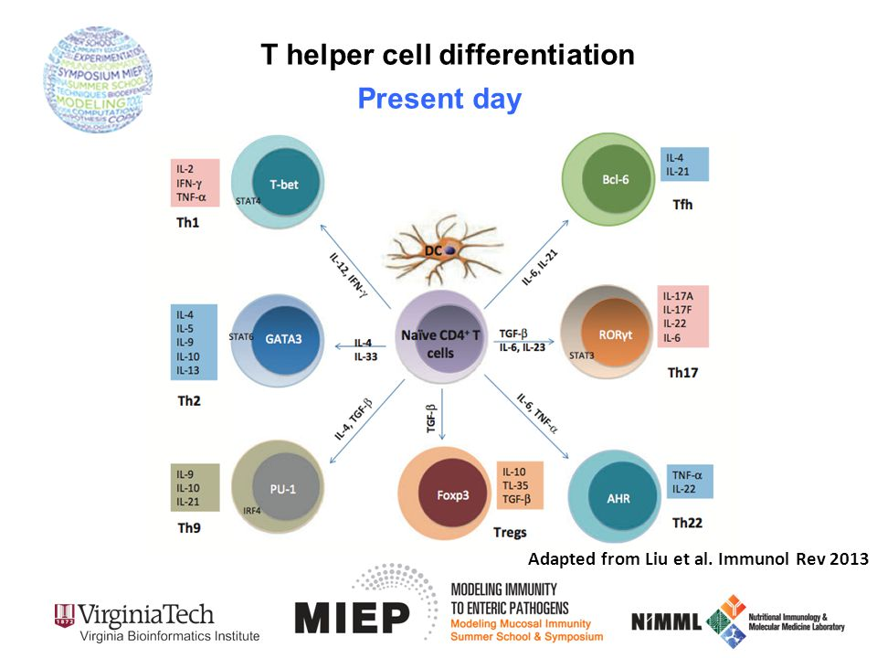 T helper cell differentiation Adapted from Liu et al. Immunol Rev 2013 Present day