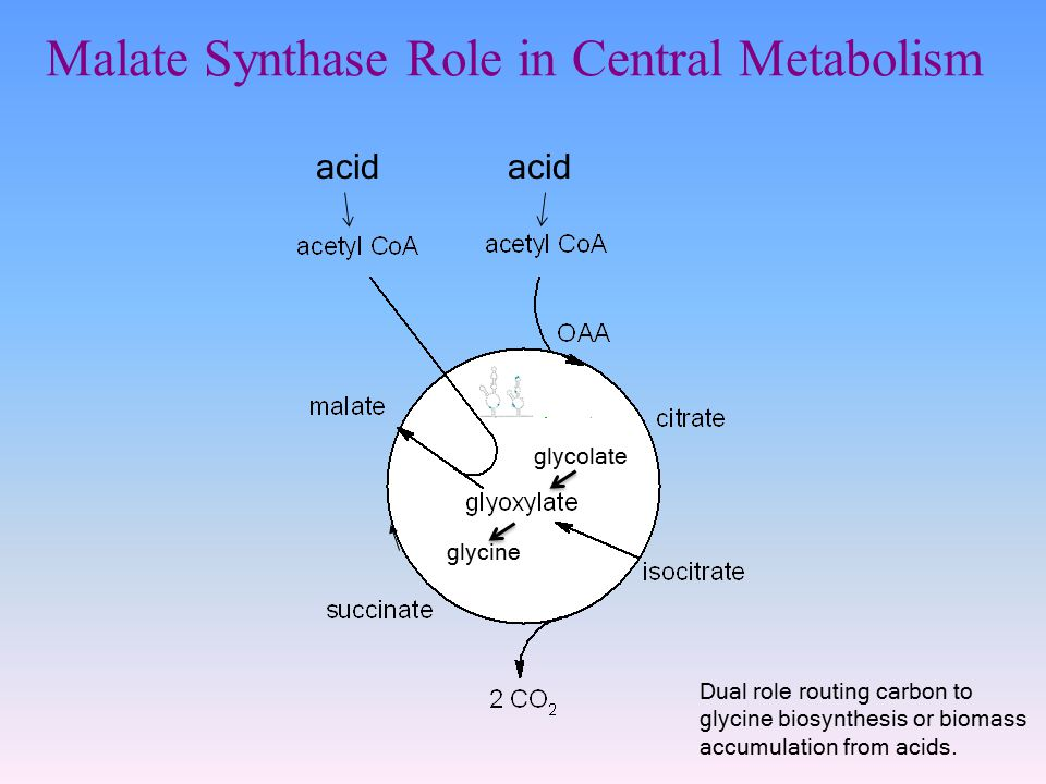 Malate Synthase Role in Central Metabolism acid glycolate glycine Dual role routing carbon to glycine biosynthesis or biomass accumulation from acids.
