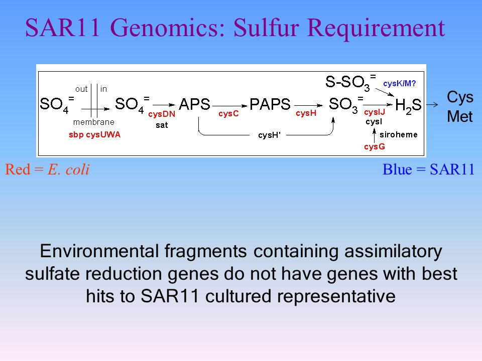 SAR11 Genomics: Sulfur Requirement Red = E.
